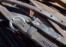 Frenos del caballo Foto de archivo libre de regalías