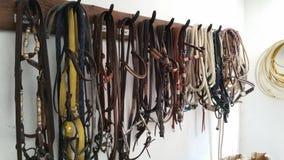 Frenos del caballo Imágenes de archivo libres de regalías