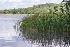 Frensham pond in Surrey stock photography