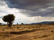 Frente africano de la sabana de la lluvia  Foto de archivo libre de regalías