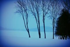 Frente azul del bosque Imagen de archivo