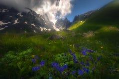 Frente hermoso de las flores de montañas brumosas Imagenes de archivo