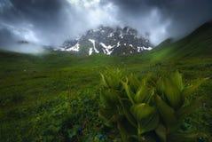 Frente hermoso de las flores de montañas brumosas imagen de archivo