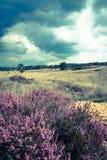 Frente púrpura Imagenes de archivo