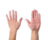 Frente y parte posterior de la mano Fotografía de archivo