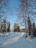 Frentes nevado do inverno da paisagem da natureza e trilha do esqui Imagens de Stock Royalty Free
