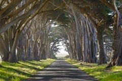 Frequentierte Bäume und Straße Stockbild