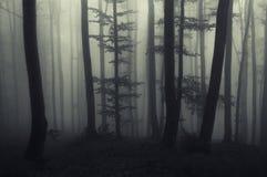 Frequentierter dunkler Wald nachts lizenzfreie stockfotografie