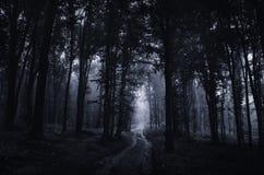 Frequentierter Wald nachts mit der Straße, die gespenstische Bäume durchläuft Stockfotografie