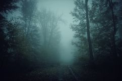Frequentierter Waldweg durch den Nebel Lizenzfreie Stockfotografie