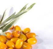 Fres sea buckthorn berries with leafs Stock Photos