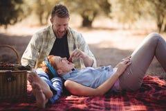 Fresa de alimentación del hombre alegre a la mujer en la granja Fotografía de archivo