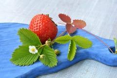 Fresa de cosecha propia, madura y flor floreciente en cierre azul, de madera de la textura para arriba Imagen de archivo