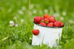 Fresa de jardín fresca en taza Foto de archivo