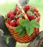Fresa en una cesta Foto de archivo