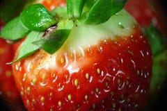 Fresa fresca Foto de archivo