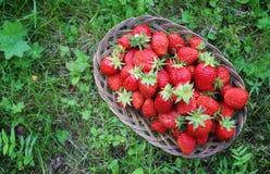 Fresa fresca al aire libre Foto de archivo libre de regalías