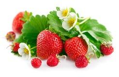 Fresa fresca con la hoja y la flor verdes Fotografía de archivo