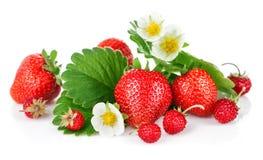 Fresa fresca con la hoja y la flor verdes Imagenes de archivo