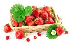 Fresa fresca de la cesta con la hoja y la flor verdes Foto de archivo