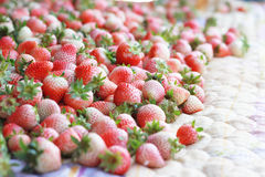 Fresa fresca dulce Imagen de archivo