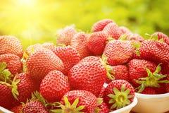 Fresa fresca, frutas rojas maduras en la naturaleza, fondo sano de la comida iluminado por la luz del sol Fotografía de archivo libre de regalías