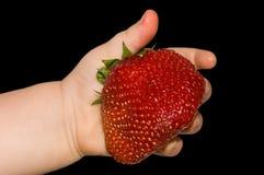 Fresa grande en la mano del niño Imagen de archivo