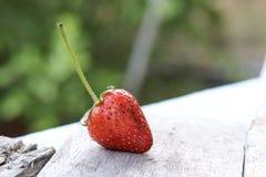 Fresa orgánica deliciosa fresca imagenes de archivo