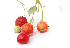 Fresa orgánica fresca y una cereza roja Imagen de archivo libre de regalías