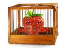 Fresa, preso en la jaula. Fotografía de archivo libre de regalías