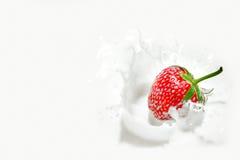 Fresa que cae en el chapoteo lechoso Foto de archivo