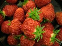 Fresa roja fresca Foto de archivo libre de regalías