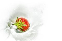 Fresa roja que cae en el chapoteo lechoso Fotografía de archivo libre de regalías