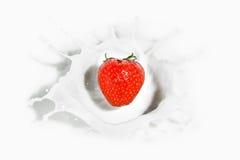 Fresa roja que cae en el chapoteo lechoso Fotos de archivo libres de regalías