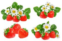 Fresa y flor de la fresa aislada en blanco Fotos de archivo