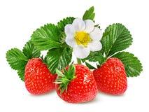 Fresa y flor de la fresa aislada en blanco Foto de archivo