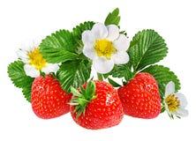 Fresa y flor de la fresa aislada en blanco Imágenes de archivo libres de regalías