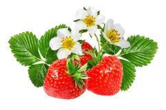 Fresa y flor de la fresa aislada en blanco Fotografía de archivo