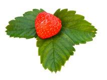 Fresas aisladas imagen de archivo libre de regalías