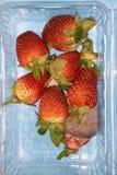 Fresas con el molde fotografía de archivo libre de regalías