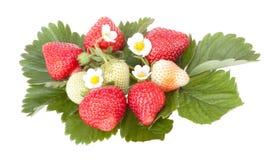 Fresas con las flores de la fresa de las hojas Imagen de archivo libre de regalías