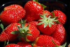 Fresas de jardín maduras frescas rojas Imagen de archivo
