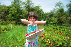 Fresas de la cosecha de la muchacha Foto de archivo libre de regalías