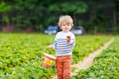 Fresas de la cosecha del muchacho del niño en granja, al aire libre Fotos de archivo