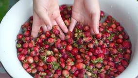 Fresas de los washs de la mano de Childs pequeñas en cuenco Primer C?mara lenta almacen de video
