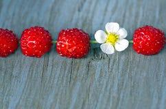 Fresas de madera con una flor Foto de archivo libre de regalías