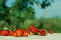 Fresas del jardín fotografía de archivo