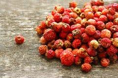 Fresas del prado Imagenes de archivo