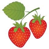 Fresas del rojo del vector Fresa del vector Foto de archivo