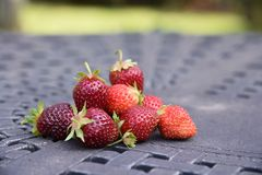 Fresas del verano Imagen de archivo libre de regalías